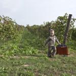 Maxov vinohrad nam dal panensku urodu