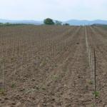 Hugov vinohrad v máji 2008 v čase jeho narodenia