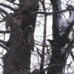 Biodyn 3 sovy